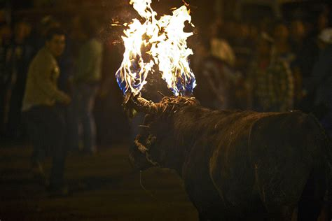 Hot Shots Photos of the Day: Bull with Flaming Horns
