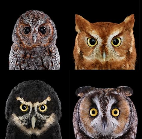 because birds! — Who's who? Learn and see more beautiful