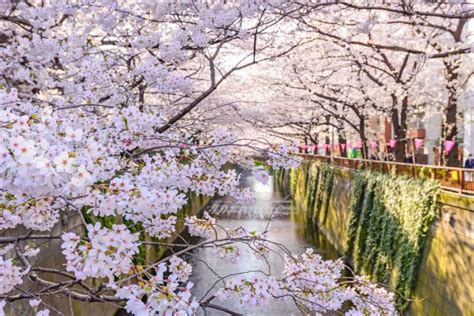 Discover Japan Tour: Culture, Traditions and Food | Zicasso