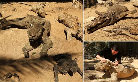 Starved to death and left to MUMMIFY in the world's worst