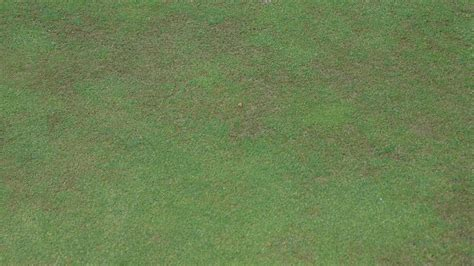 Stress points to rising Anthracnose risk   GreenCast