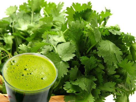 Add A Glass of Coriander Juice To Your Daily Diet & See