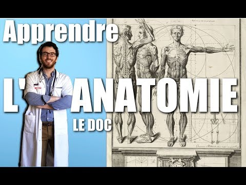 Anatomie sportive : Muscles et groupes musculaires : Grand